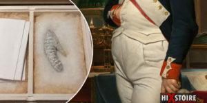 Le pénis de Napoléon Bonaparte, ou les péripéties du membre viril de l'Empereur