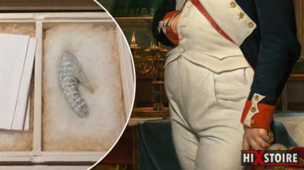 penis-de-napoleon-sexe