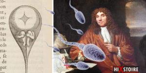 La frétillante histoire de la découverte des spermatozoïdes